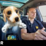 Esto es lo que ocurre si llevas una mascota suelta en el coche