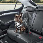 ¿Cuál es el coche ideal para viajar con un perro?