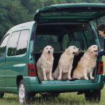 Día Mundial del Perro: nunca dejes a tu perro dentro de un coche en verano